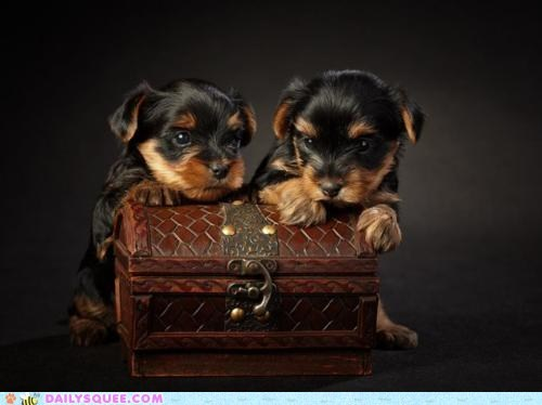 Babies baby chest dogs priceless puppies puppy treasure wealth - 5605933056
