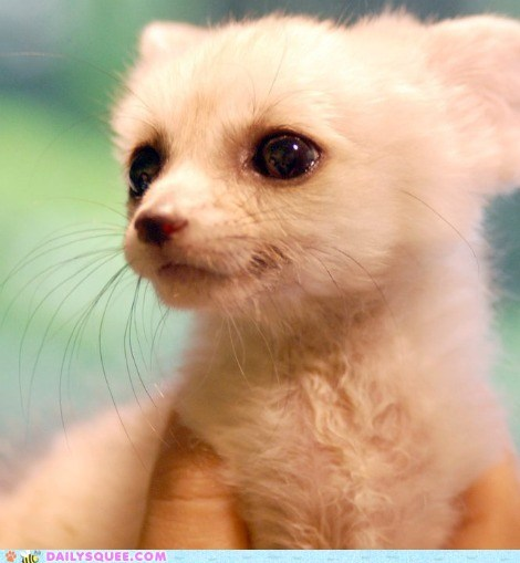 baby fennec fennec fox Hall of Fame kit new year new years resolution - 5605940992
