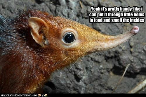 adorable animals elephant shrew nose rodent - 5607119616