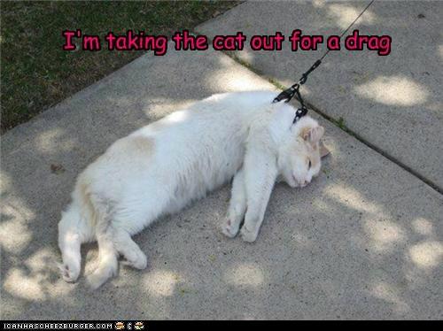caption captioned Cats drag dragging FAIL leash walking walks - 5608450304