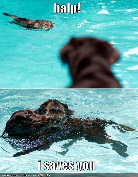 lolcats pool swimming - 560903936