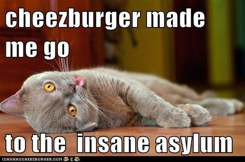 Cheezburger Image 5609302784