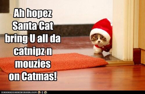 Ah hopez Santa Cat bring U all da catnipz n mouzies on Catmas!