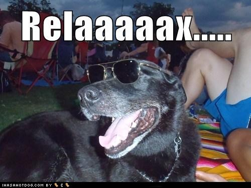 dogs,i has a hotdog,relax,sunglasses