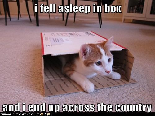 animals,cat,express mail,I Can Has Cheezburger,mail,oops,overnight delivery,post office