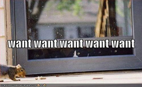 food fud lolcats squirrels want window - 561221888