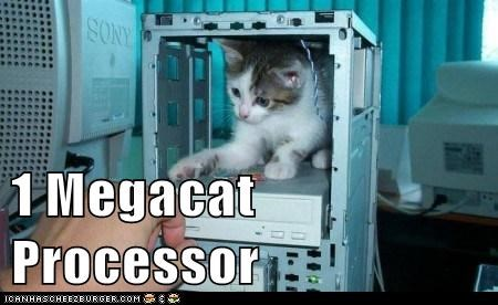 animals,best of the week,caption,captioned,cat,computer,Hall of Fame,I Can Has Cheezburger,kitten,processor,technology