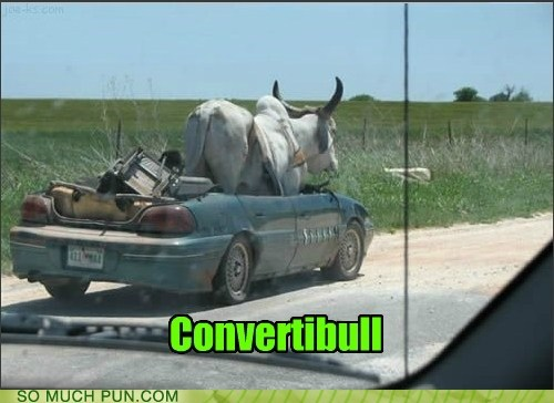 bull,car,convertible,double meaning,homophone,literalism,suffix
