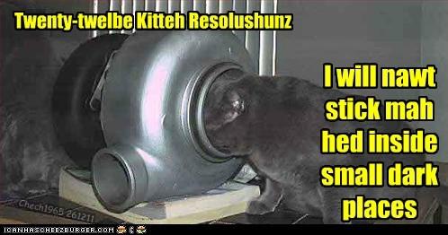 caption captioned Cats dark happy new year head holidays new years small stuck - 5615298048