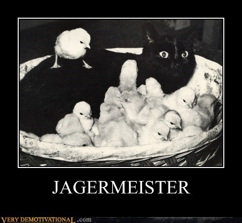 cat chicks drunk hilarious jagermeister wtf - 5615834880