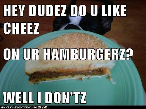 Cheezburger Image 5615917824