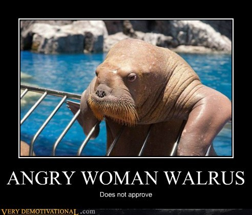 angry,animals,hilarious,walrus,woman