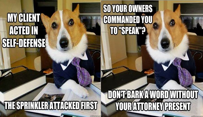 a funny list of dog memes of a dog pretending to be a lawyer for other dogs that are in trouble