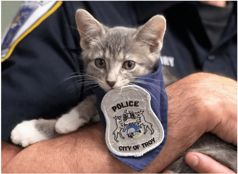 cat gifs funny kittens kitten cat police cute Cats pawfficer funny - 5616901
