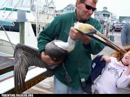 animals,attack,bird,dad,Parenting Fail,pelican