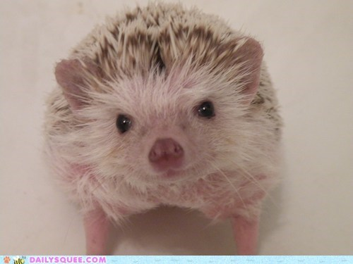 bath,bath time,bathing,do not want,hedgehog,reader squees,unhappy,wet