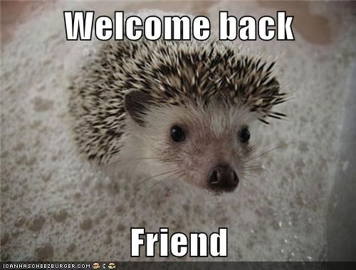 animals,hedgehog,welcome,welcome back
