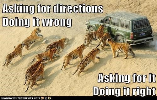 political pictures,tigers