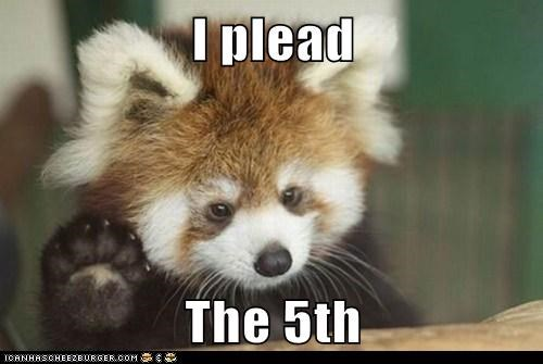 5th amendment,animals,plead the 5th,red panda
