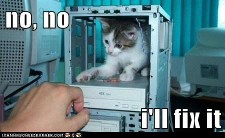 animals cat computer expert fix I Can Has Cheezburger repairs - 5617675008
