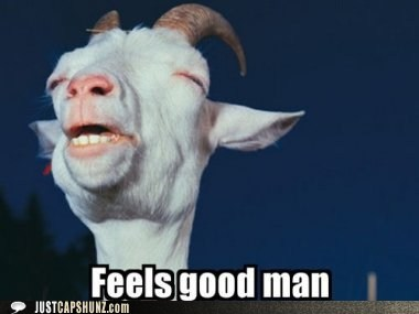 animals,feels good,Feels Good Man,goat,high,stoned,whoa