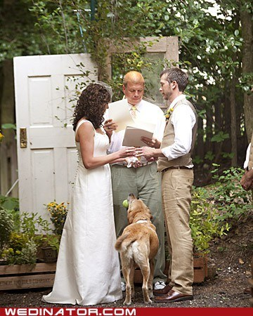 ball,bride,dogs,funny wedding photos,groom,Hall of Fame
