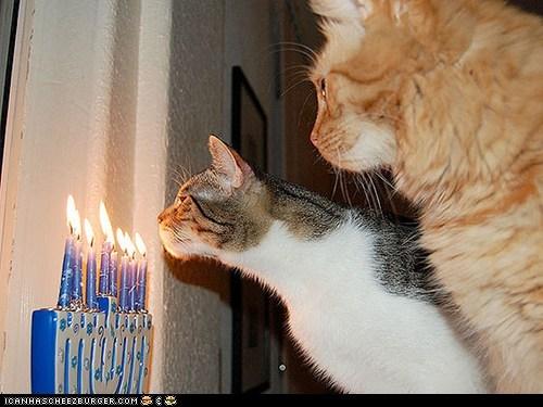 around the interwebs chanukah hanukkah holidays jewish menorah people pets - 5617781504