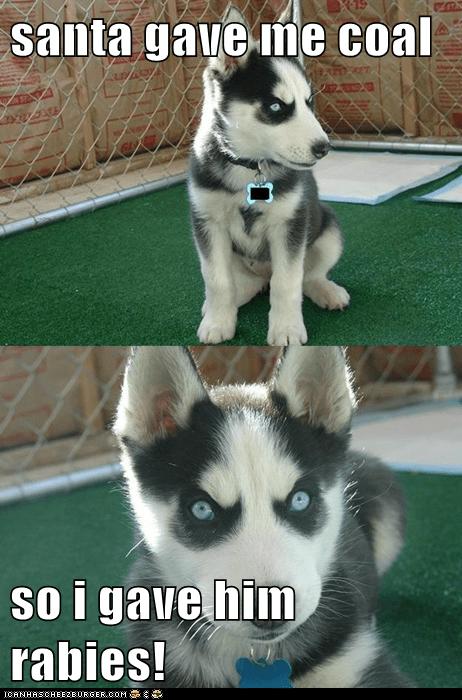 christmas coal dogs inane insanity pup presents puppies rabies santa - 5617801472