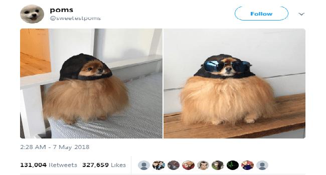twitter funny tweets animal tweets animals - 5617925