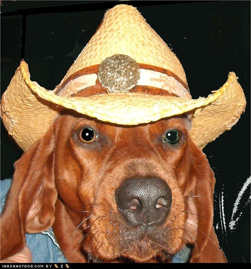 cowboy hat goggie ob teh week hat Redbone Coonhound