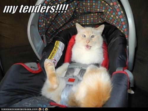 angry balls caption captioned car seat Cats do not want let me out ouch pain private bits tender tenders testicles