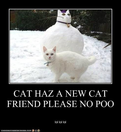 CAT HAZ A NEW CAT FRIEND PLEASE NO POO lol lol lol