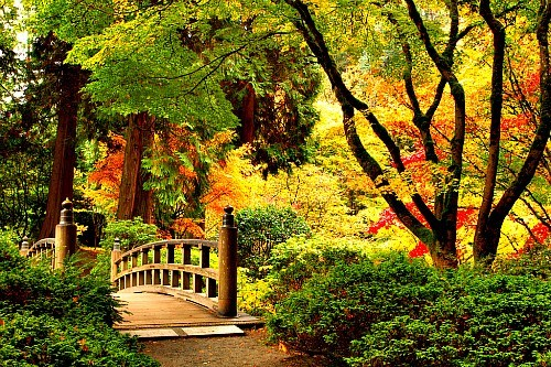 bridge foot bridge getaways gold green park trees unknown location yellow - 5618308352