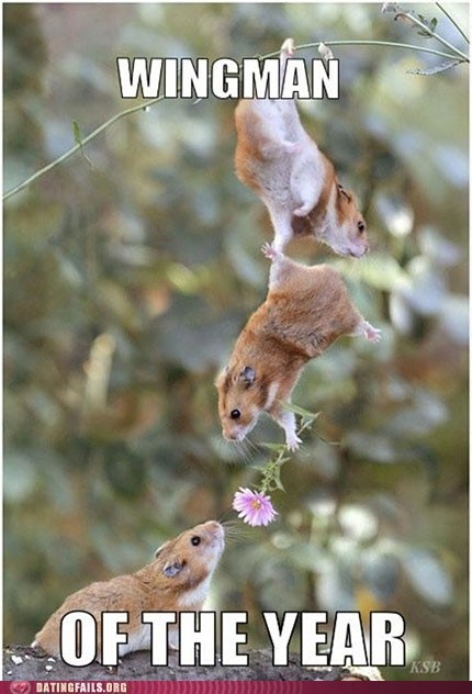 classic dating Flower got your back g rated hamsters wingman - 5618333696