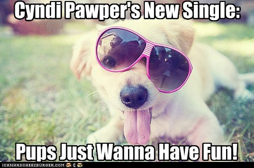 awesome cyndi lauper labrador retriever Music sunglasses - 5618493184
