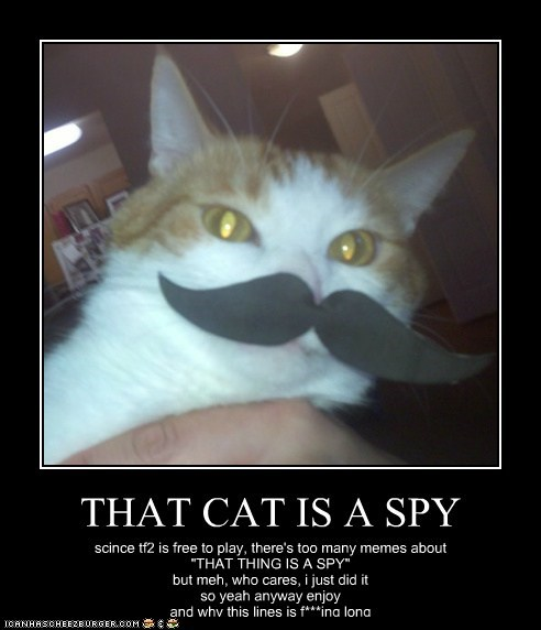 "THAT CAT IS A SPY scince tf2 is free to play, there's too many memes about ""THAT THING IS A SPY"" but meh, who cares, i just did it so yeah anyway enjoy and why this lines is f***ing long"