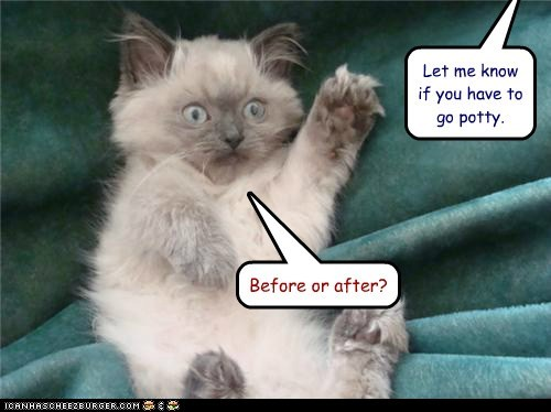 accidents after before Before And After caption captioned Cats paws pee potty raised hand uh oh - 5619318272
