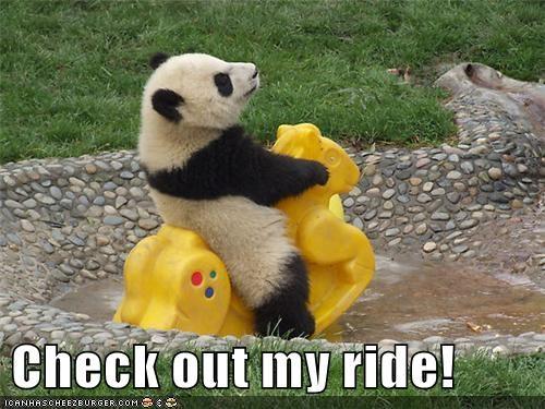 animals best of the week Hall of Fame panda panda bear play playing ride rocking horse toy - 5621170432