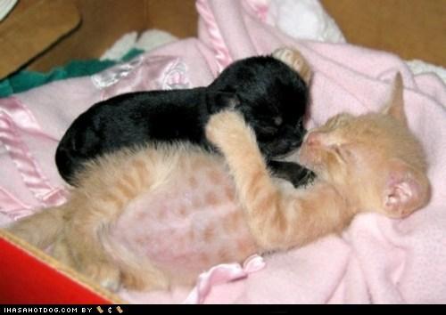 Babies baby cat friends friendship kittehs r owr friends kitten love newborn puppy - 5621239040
