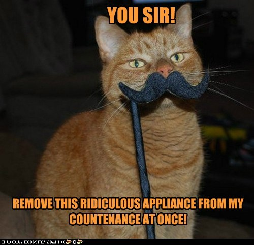 caption,captioned,Cats,do not want,fancy,mustache,old timey,remove,sir