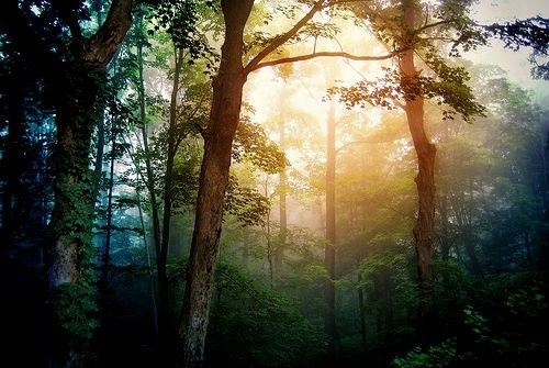 awesome Forest getaways sunlight trees unknown location - 5621372928