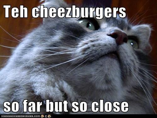 Cheezburger Image 5621469952