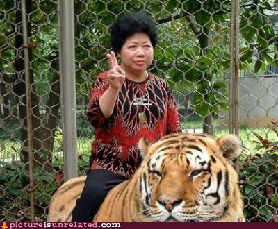 giddyup tiger wtf - 5621520896