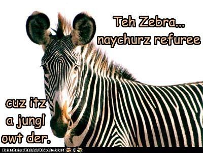 Cheezburger Image 5622155776