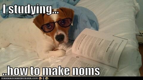 food,glasses,mixed breed,noms,reading,studying,whatbreed