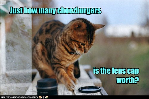Cheezburger Image 5622789632