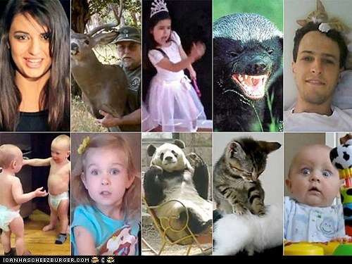 2011 around the interwebs the best of 2011 the fw viral videos - 5622797056