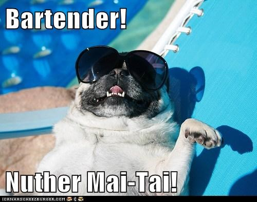 alcohol,drink,drinking,mai tai,pug,sunglasses