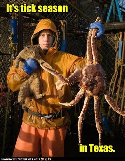 animals cat crab texas whoa - 5623016192