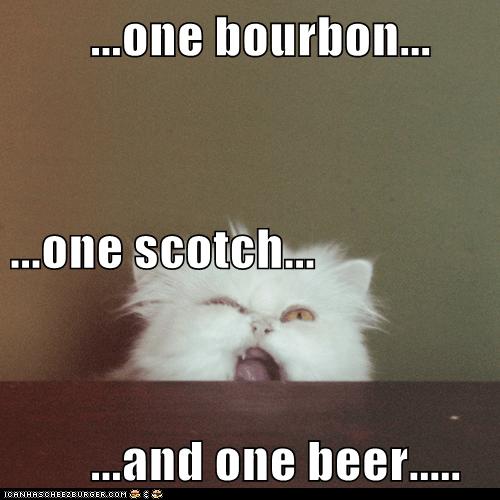 animals beer cat I Can Has Cheezburger - 5623118336